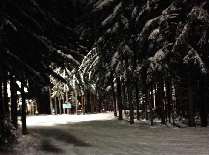 Snowy Evergreens
