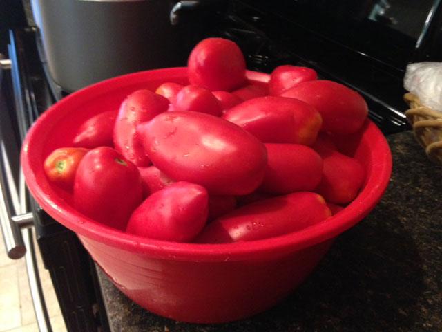 Garden tomatoes 2015