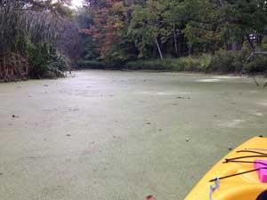 12-mile-creek-sludge
